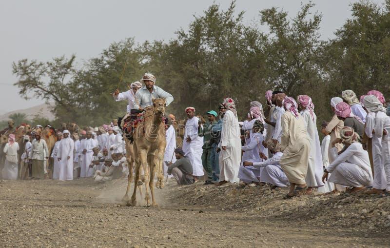赛跑在多灰尘的乡下路的阿曼人骆驼 免版税库存照片