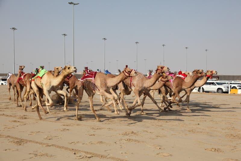 赛跑机器人的骆驼骑师 免版税图库摄影