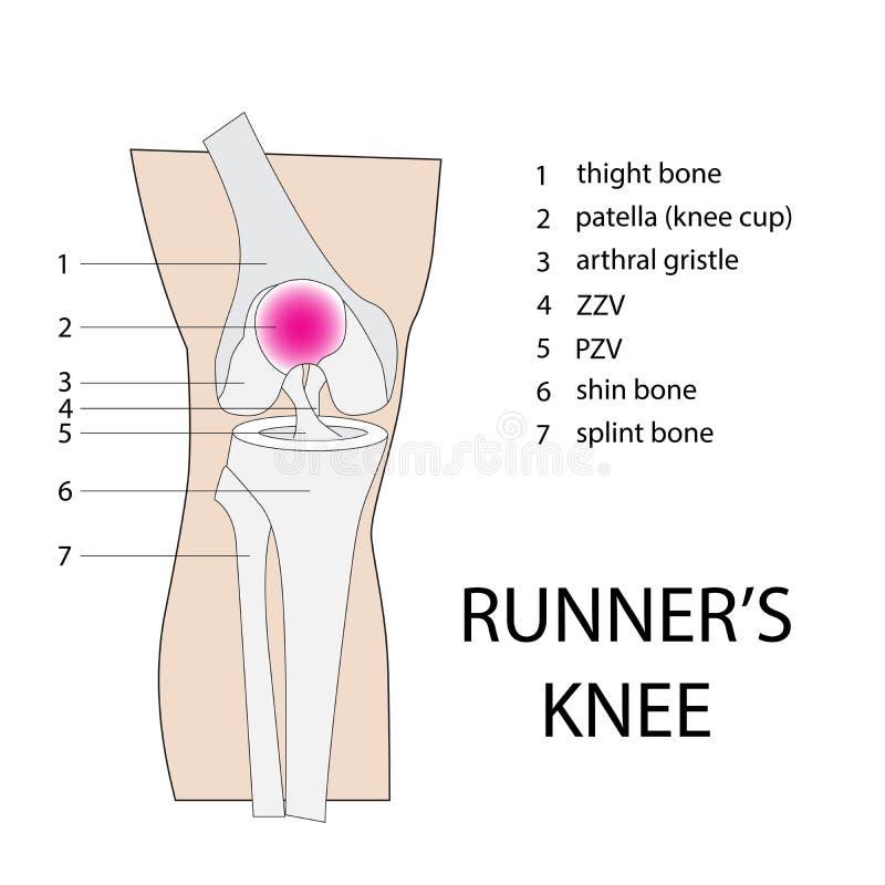赛跑者膝盖 库存例证