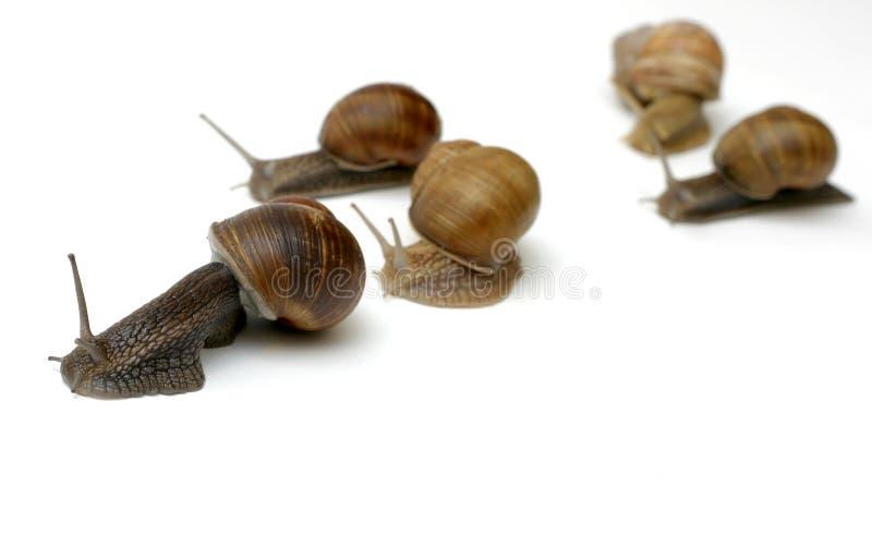 赛跑蜗牛 免版税库存照片