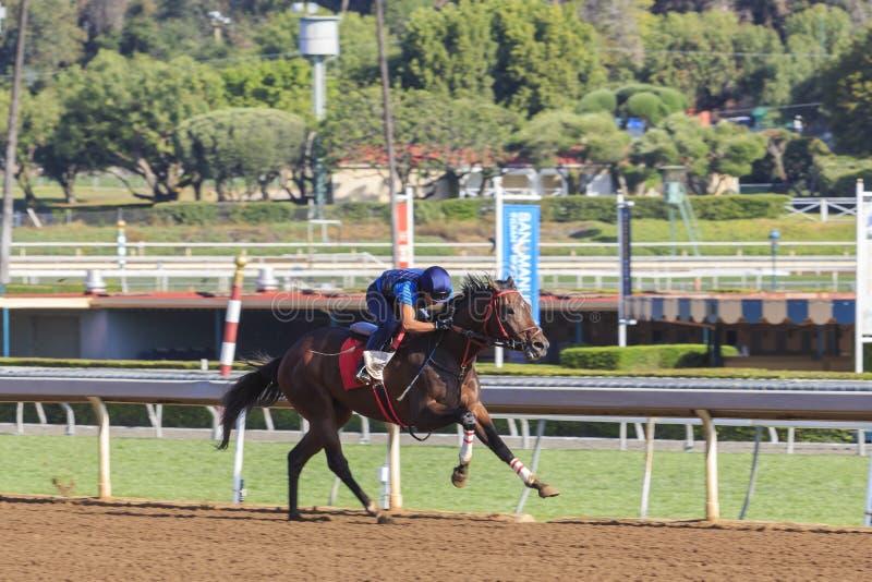赛马在圣塔阿尼塔公园 库存图片