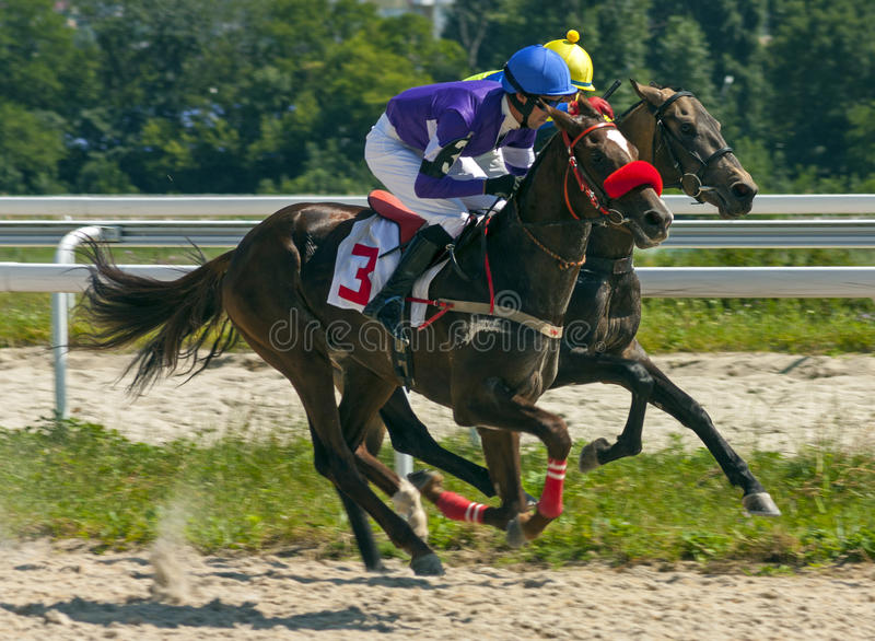 赛马在Pyatigorsk 免版税库存图片