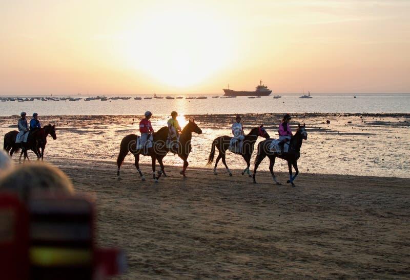 赛马在Sanlucar de Barrameda,卡迪士海滩  库存图片