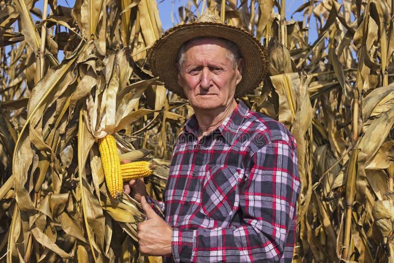 赞许玉米是好 免版税库存图片