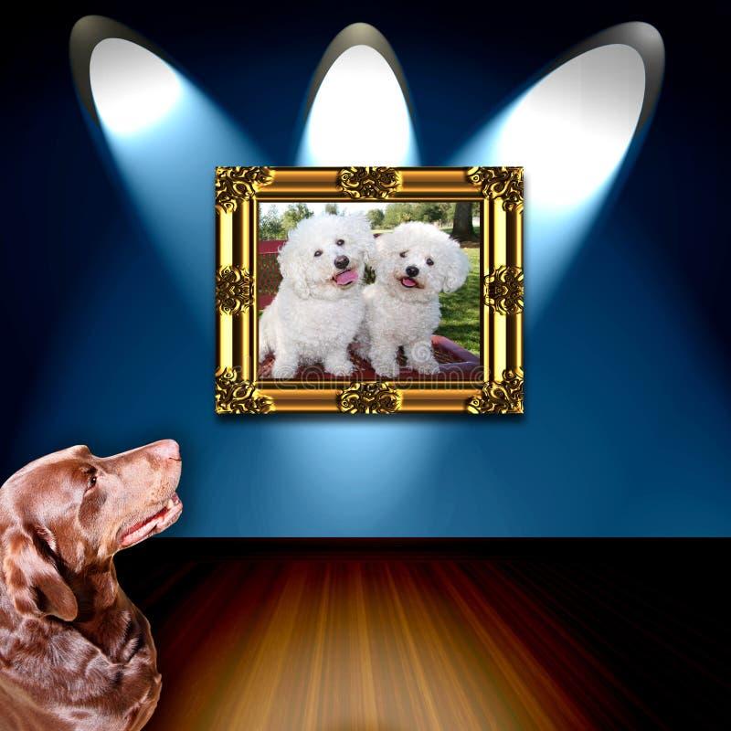 赞赏的狗照片 免版税库存照片