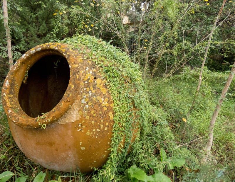 赤土陶器水缸在长得太大的离开的庭院里 库存照片