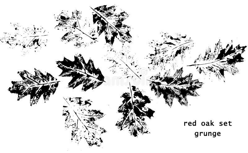 赤栎叶子 向量例证