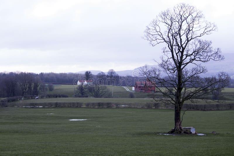 赤裸树在英国乡下 免版税库存图片