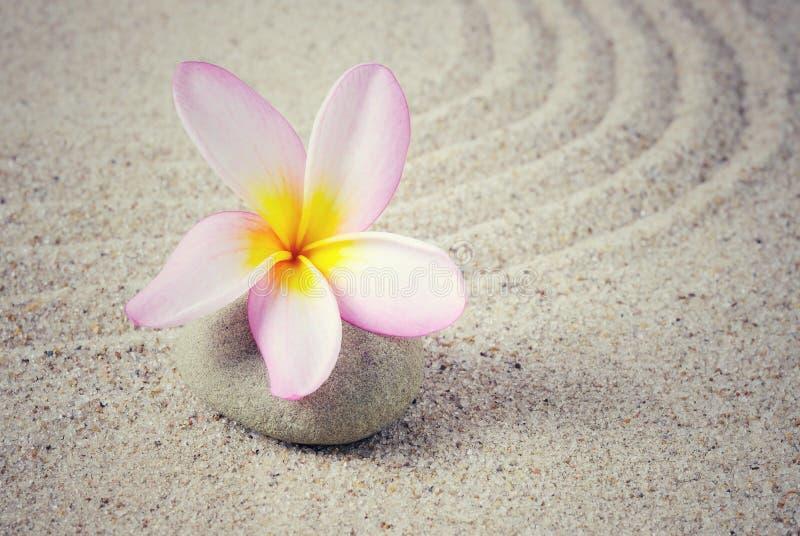 赤素馨花花有沙子背景 库存图片