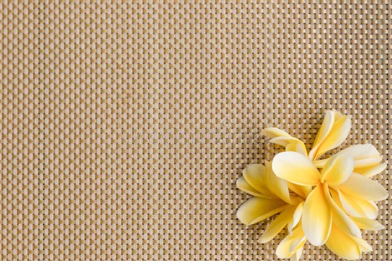 赤素馨花/羽毛在placemat背景 图库摄影