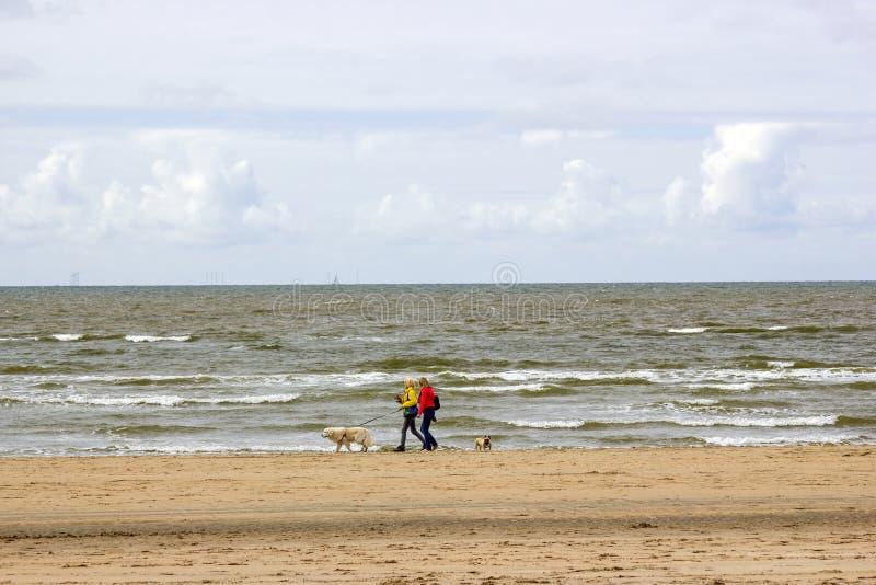 走与在海滩的狗在荷兰 免版税库存照片