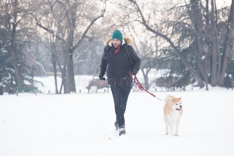 走与它的在雪的所有者的秋田狗 美丽的概念礼服女孩纵向佩带的空白冬天 库存照片