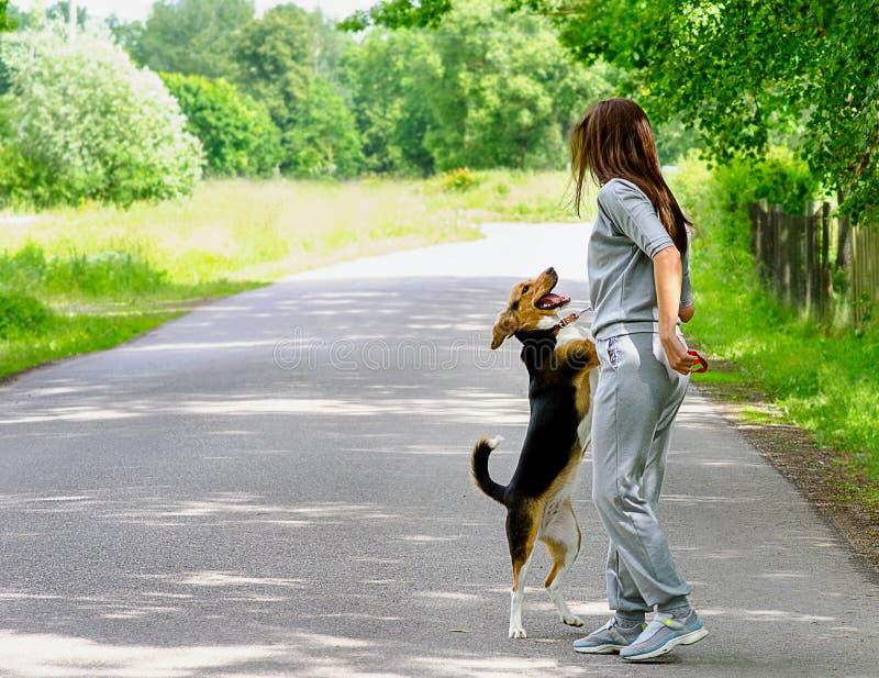 走与小猎犬狗的少妇 库存照片