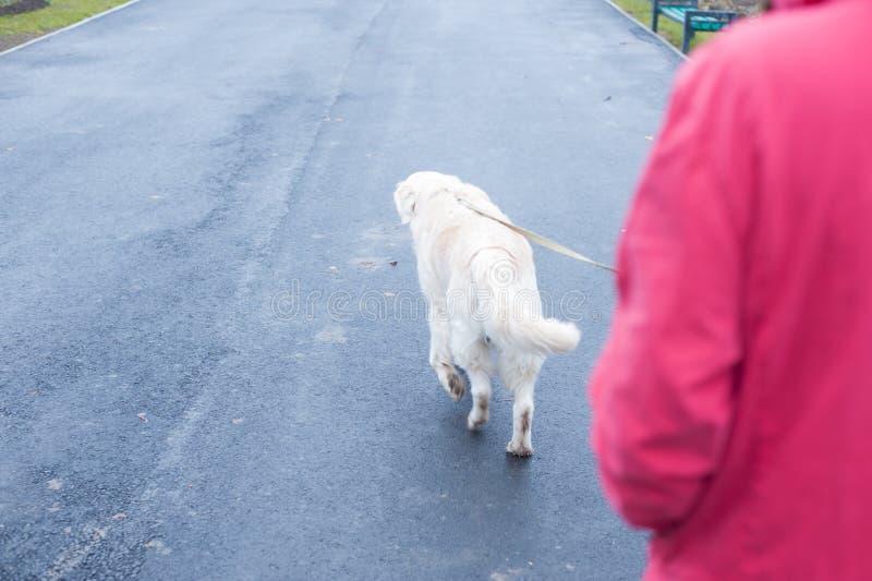 走与狗在一多雨秋天天 库存图片