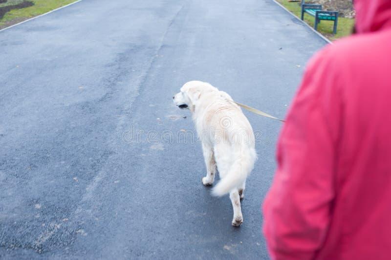 走与狗在一多雨秋天天 免版税图库摄影