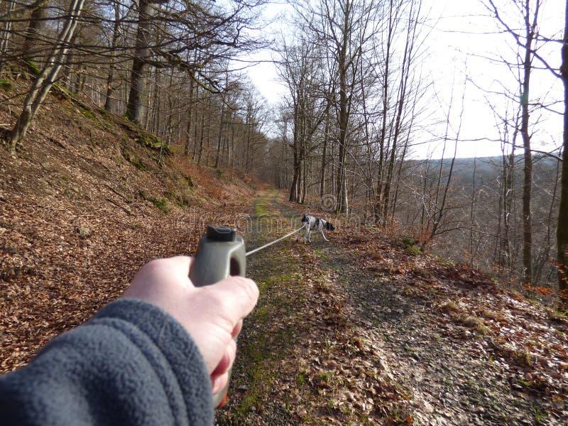 走与狗在森林里 免版税库存照片