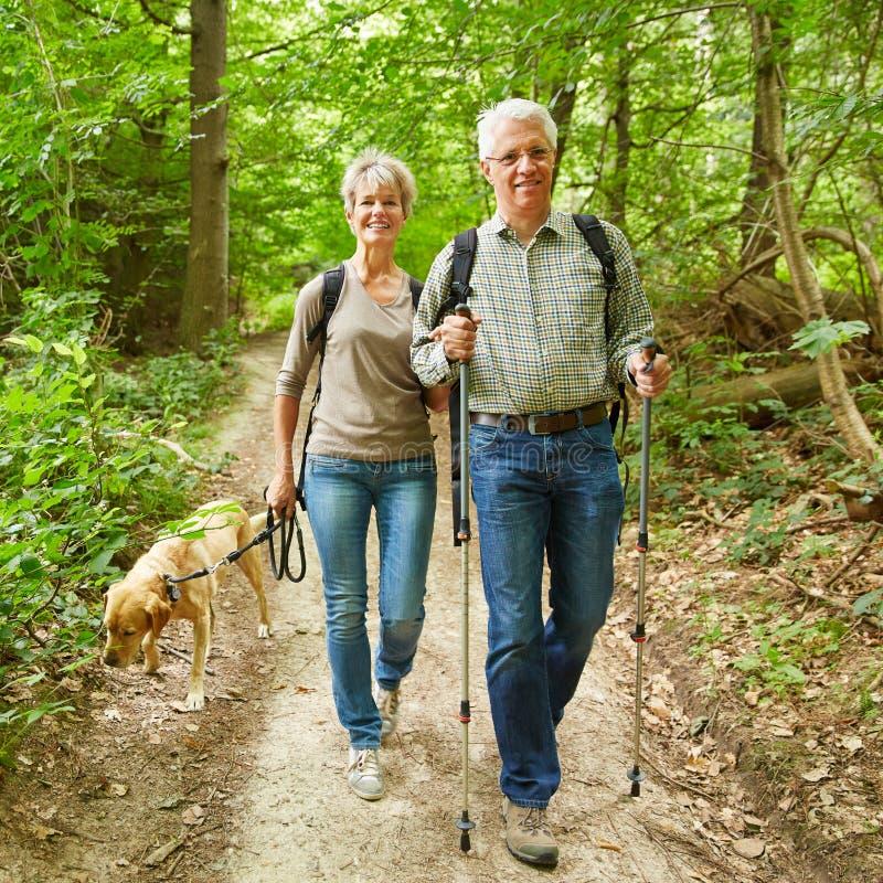 走与狗的两个前辈在森林里 免版税库存图片