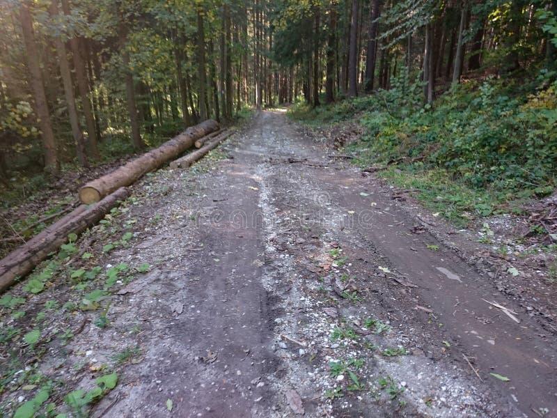 走和远足与高大的树木的森林地路在早期的春天 早期的横向春天 库存照片
