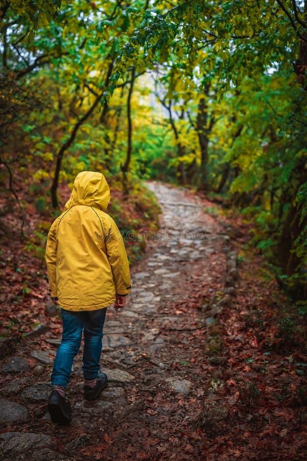 走在一条道路的女孩在森林 库存图片