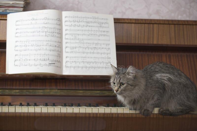 走在与音乐纸张的钢琴钥匙的猫 库存照片
