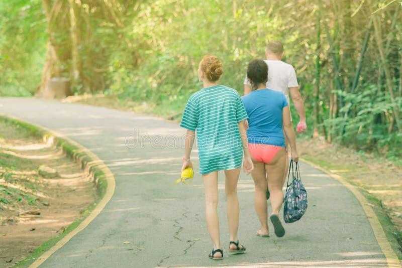走在供徒步旅行的小道的后面观点的人在森林 库存照片