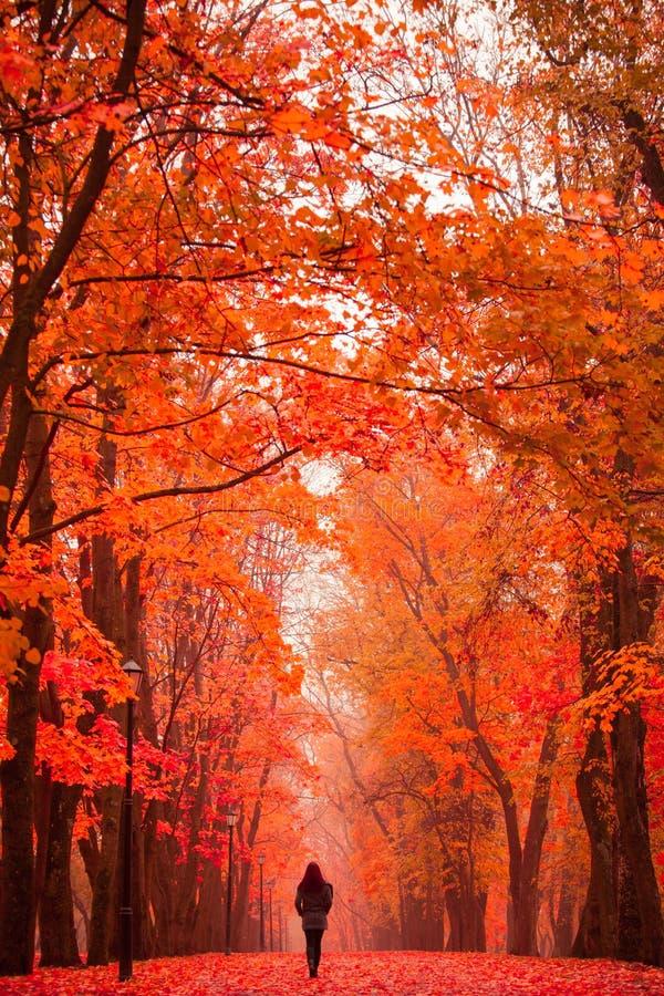 走在公园的孤独的妇女在一有雾的秋天天 库存图片