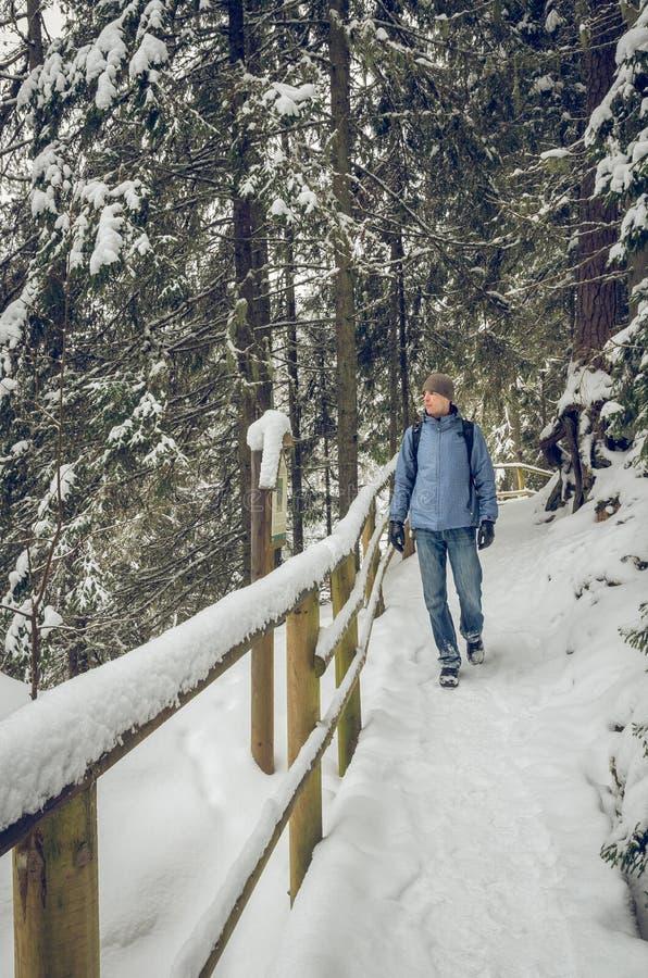 走在冬天供徒步旅行的小道的远足者 免版税库存图片