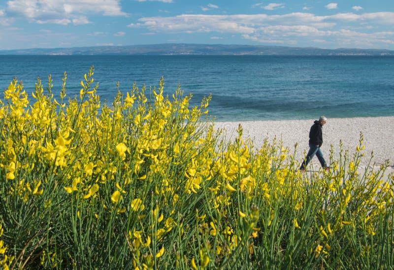 走在分裂克罗地亚的海滩的一个人 免版税库存照片