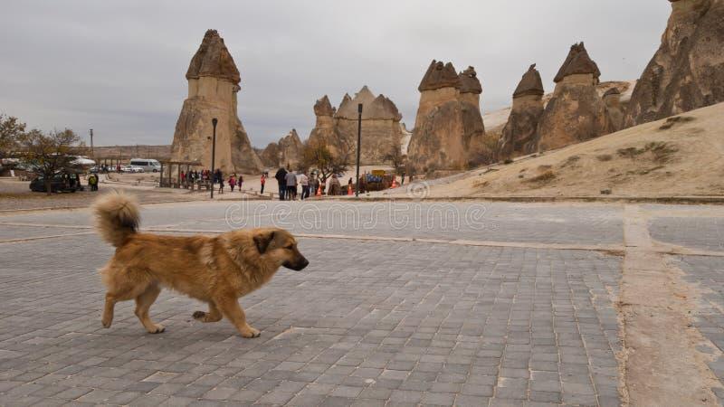 走在卡帕多细亚疆土的无家可归的蓬松美丽的小犬座  在背景中是著名形成 库存照片