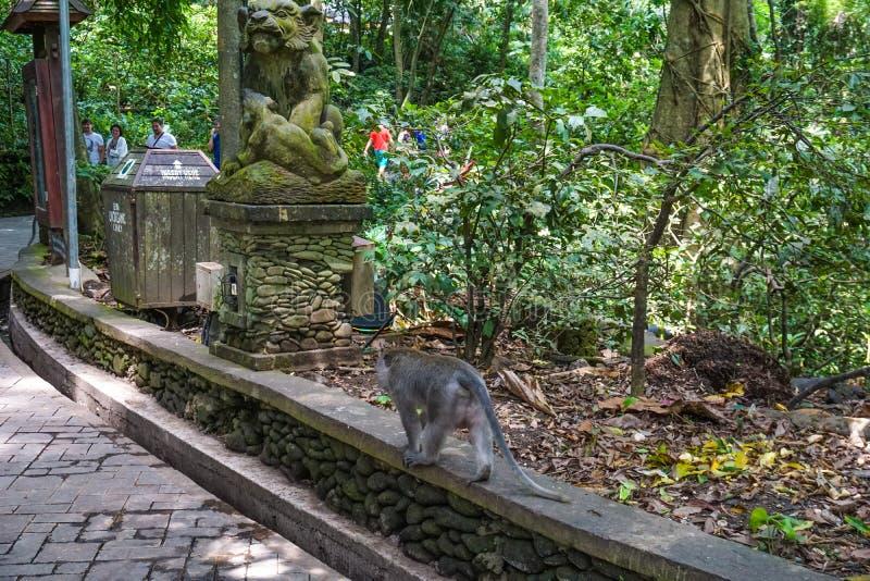 走在地面上的猴子 库存照片