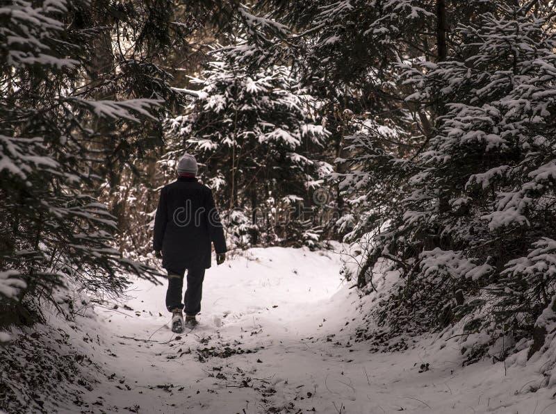 走在多雪的森林 图库摄影