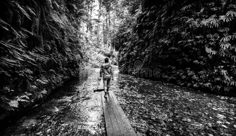 走在委员会的人通过蕨峡谷的,加利福尼亚北部The Creek 图库摄影