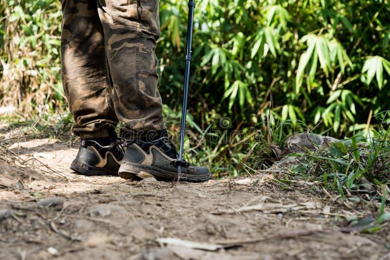 走在山供徒步旅行的小道的徒步旅行者在有阳光的绿色夏天森林里 库存图片