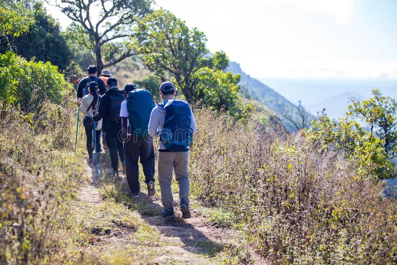 走在山森林的小组徒步旅行者 免版税库存图片