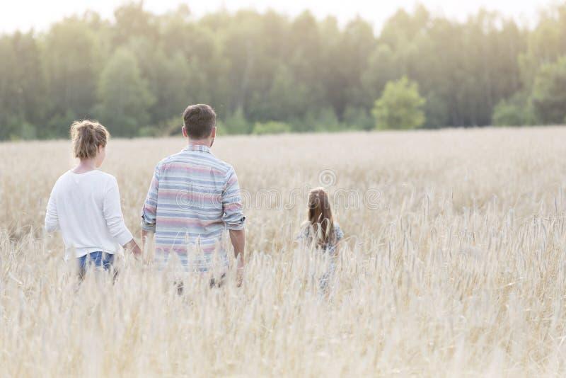 走在庄稼中的家庭背面图在农场 免版税库存照片