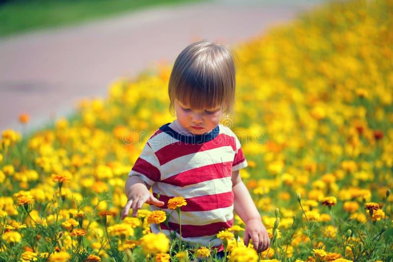 走在开花的草坪的小男孩 库存图片
