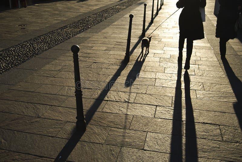 走在日落的狗 免版税库存图片