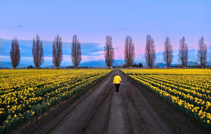 走在春天领域和胡同的妇女在日落 库存照片