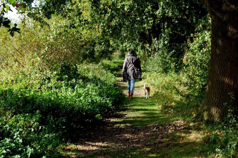 走在有她的狗的绿色森林里的妇女 免版税库存图片