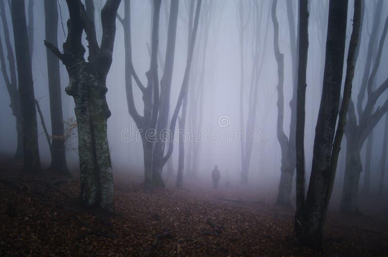 走在有雾的可怕森林里的人 库存图片
