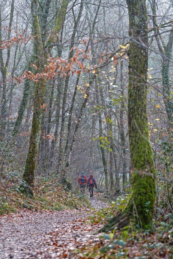 走在森林在一有雾的天 免版税库存图片