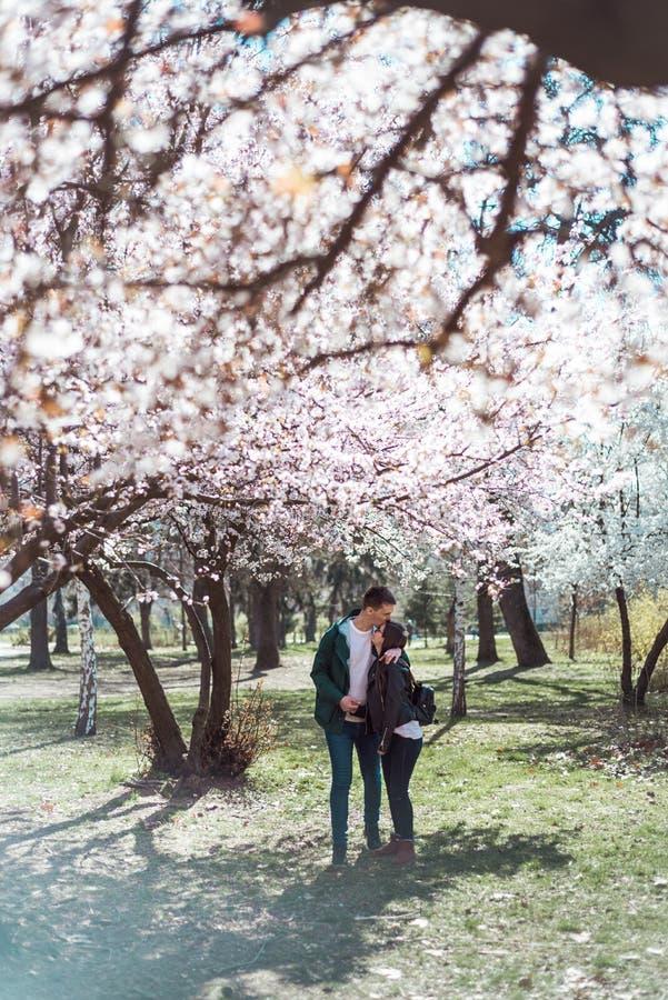 走在樱花中的年轻夫妇 库存图片