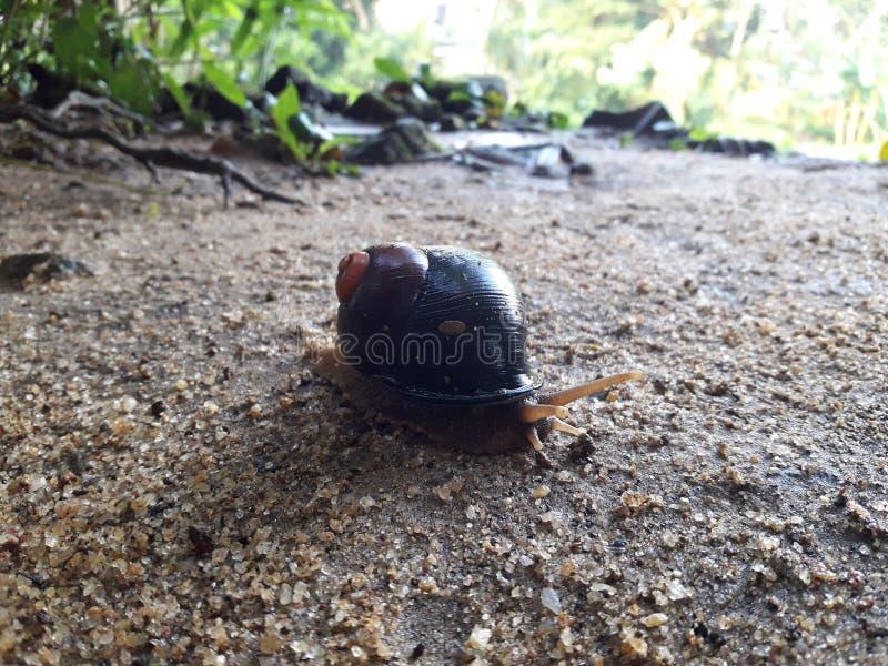 走在沙子的蜗牛 免版税库存照片