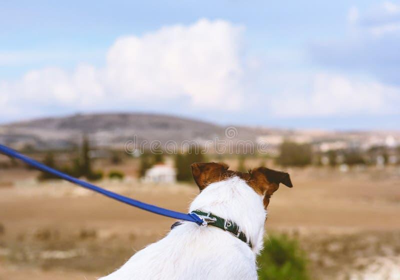 走在皮带的狗看在典型的塞浦路斯国家视图 库存图片