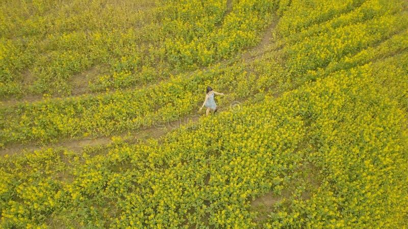 走在花田的少妇 在领域的夏天黄色花 库存照片