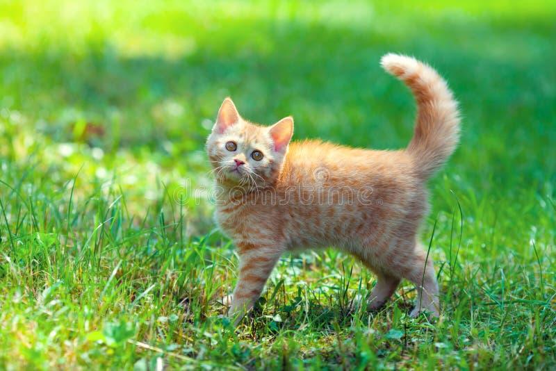 走在草的小猫 库存照片