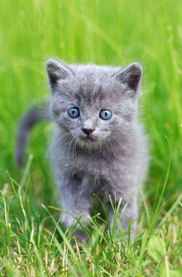 走在草的猫 免版税库存照片
