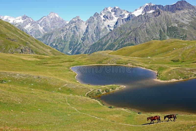 走在草的马在有山的湖附近在t 图库摄影