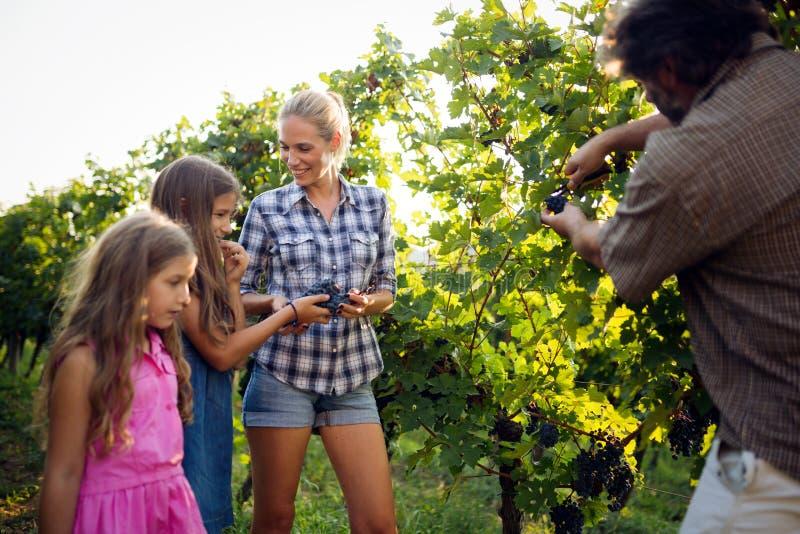 走在葡萄园里的愉快的酒种植者家庭 库存照片