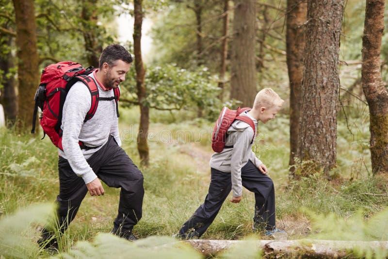 走在足迹的男孩的侧视图在有他的父亲的一个森林里,选择聚焦 图库摄影